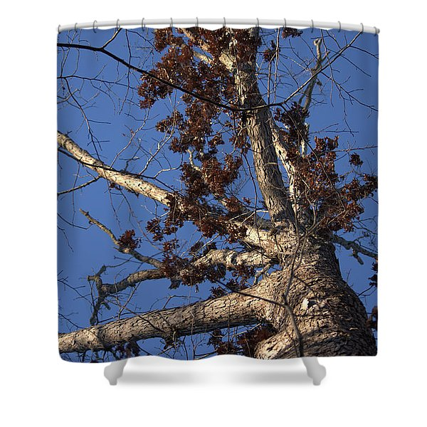Tree And Branch Shower Curtain