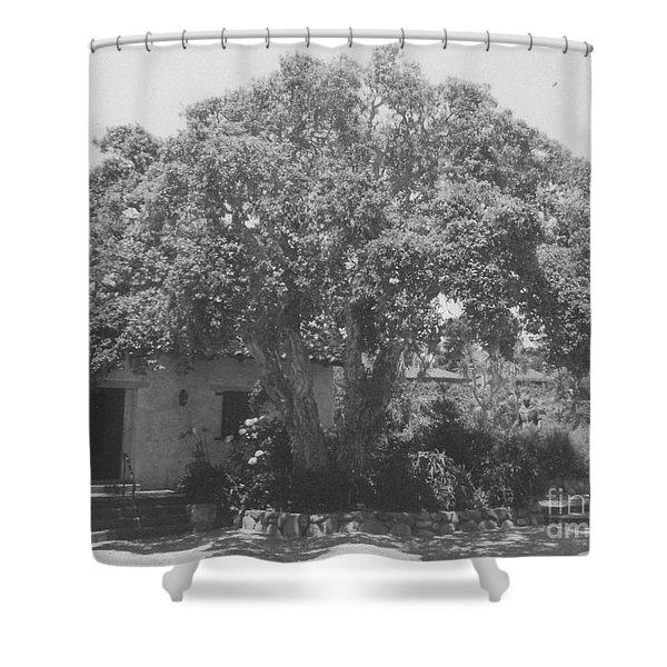 Tree At Carmel Mission Shower Curtain
