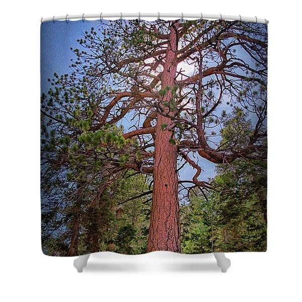 Tree Cali Shower Curtain