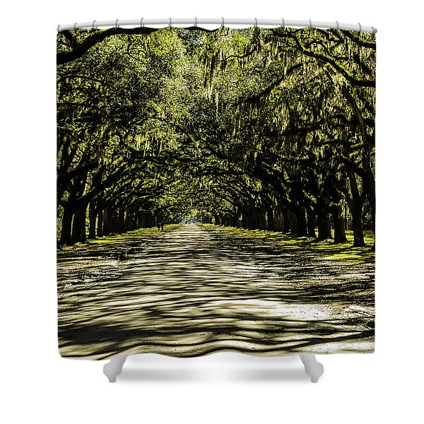Tree Covered Approach Shower Curtain