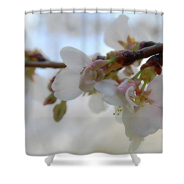 Dogwood Branch Pink Shower Curtain