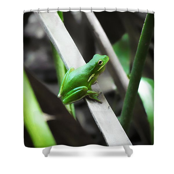 Tree Frog Shower Curtain
