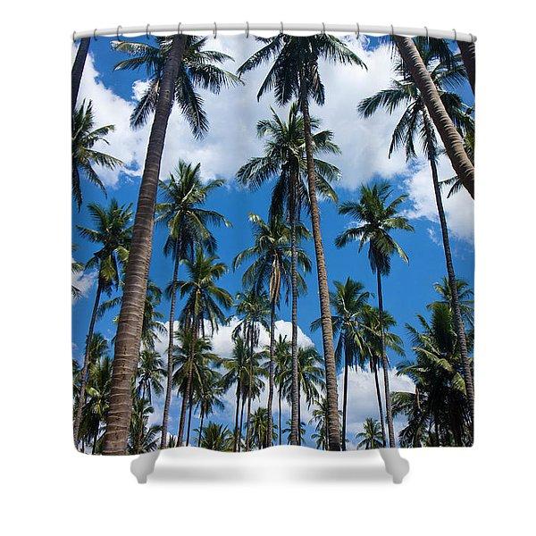 Tree Giants Shower Curtain