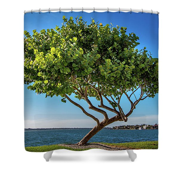 Tree On The Bay Shower Curtain