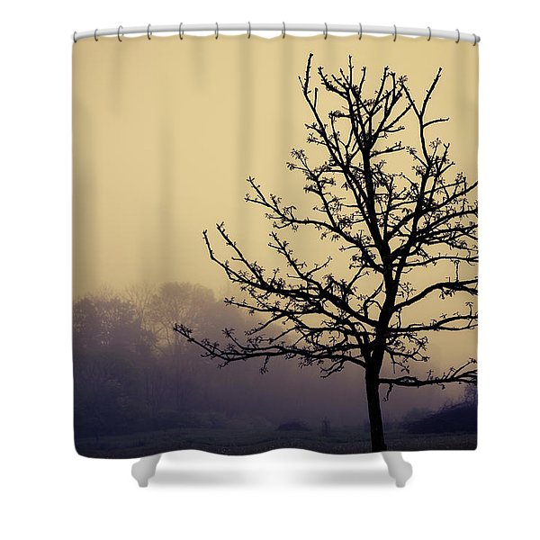 Tree Silhouette On A Foggy Morn Shower Curtain
