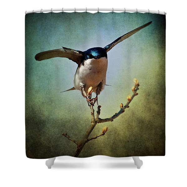 Tree Swallow 2 Shower Curtain
