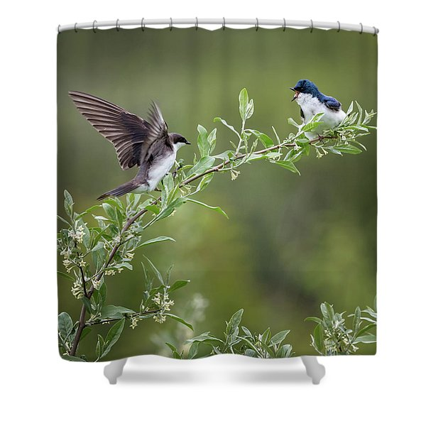 Tree Swallows Square Shower Curtain