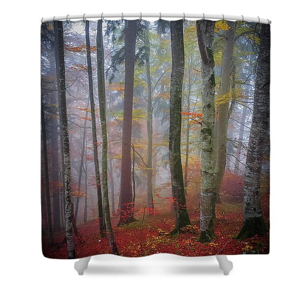 Tree Trunks In Fog Shower Curtain
