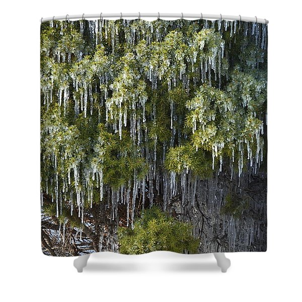 Treecicle Shower Curtain