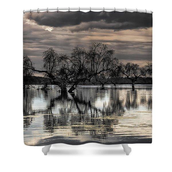 Trees Dream Shower Curtain