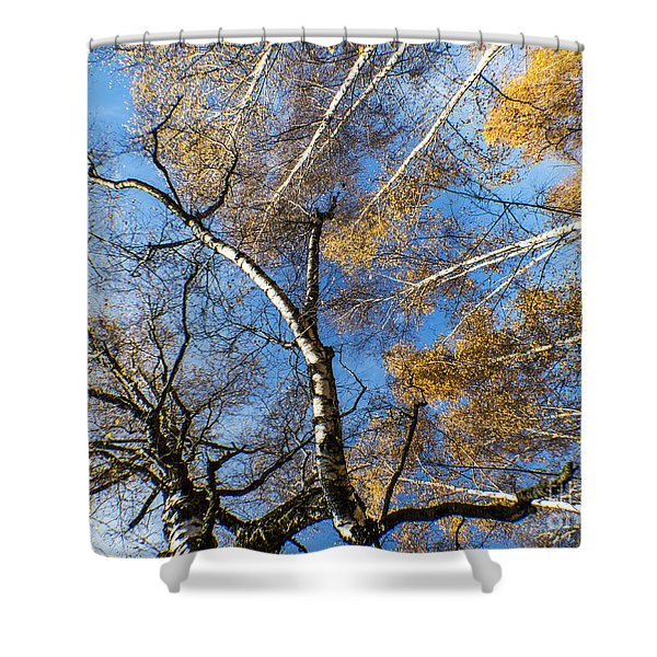 Trees Grow To The Sky Shower Curtain