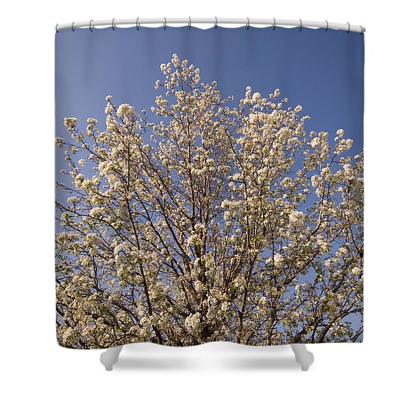Trees In Bloom At Lincoln, Nebraskas Shower Curtain