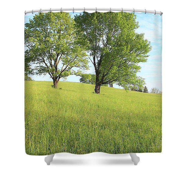 Summer Trees 2 Shower Curtain