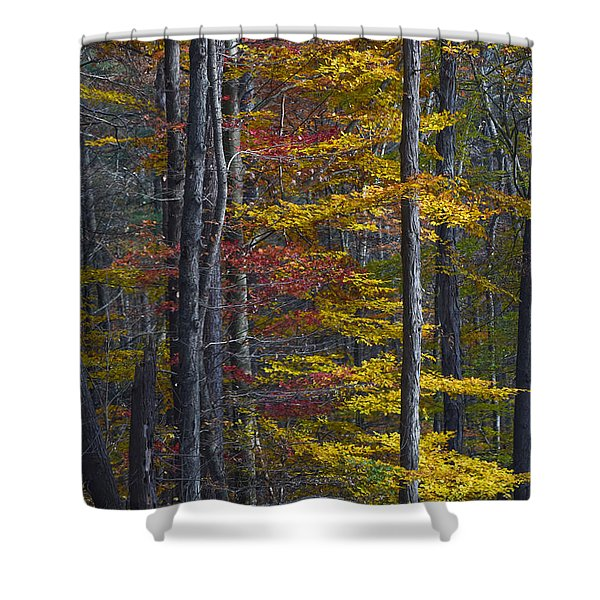Trees With Autumn Colors 8260c Shower Curtain