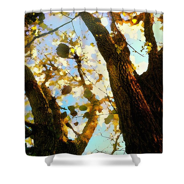 Treetop Abstract-look Up A Tree Shower Curtain