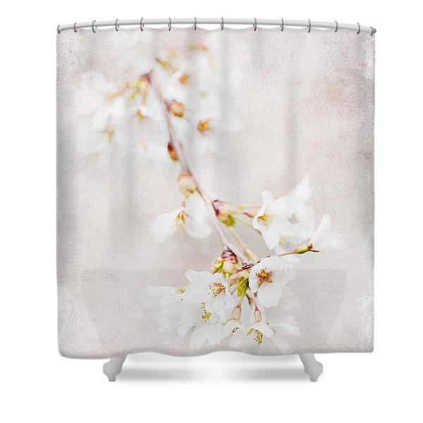 Triadelphia Cherry Blossoms Shower Curtain