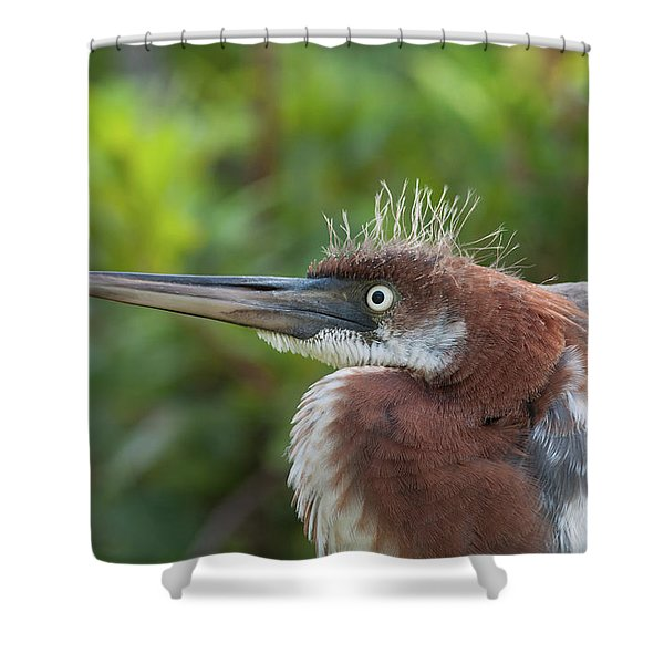 Tricolored Heron - Bad Hair Day Shower Curtain