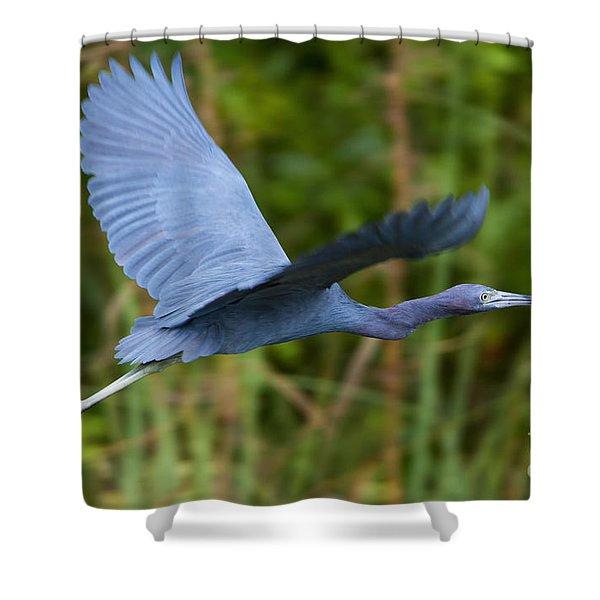 Tricolored Heron Flight Shower Curtain
