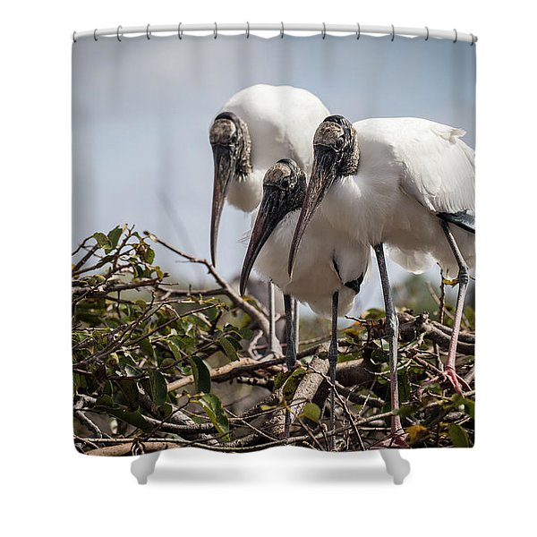 Trio Of Wood Storks Shower Curtain