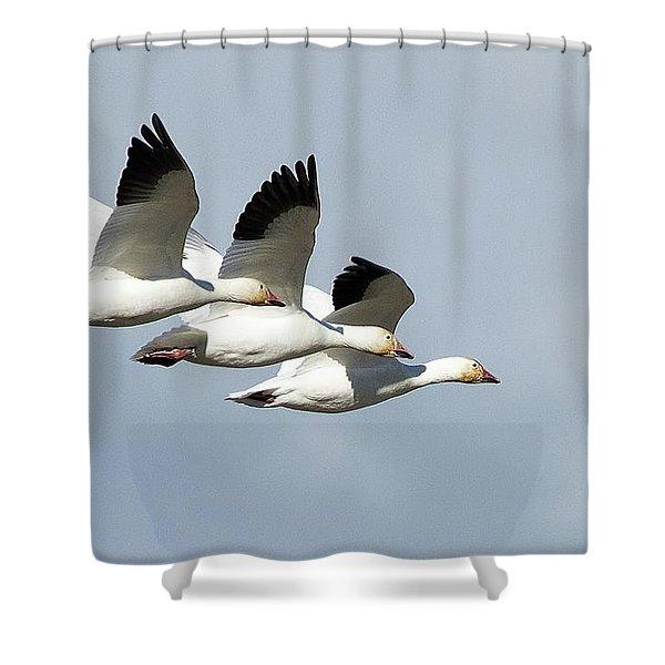 Triple Play Shower Curtain