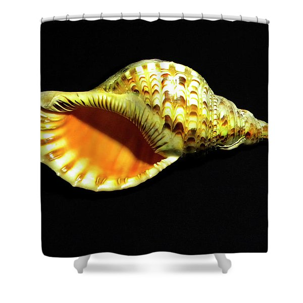 Triton Trumpet Seashell Cymatium Tritonis Shower Curtain