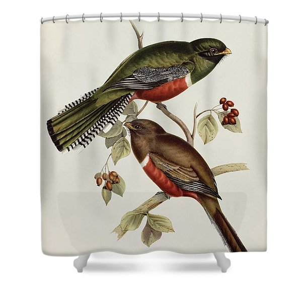 Trogon Collaris Shower Curtain