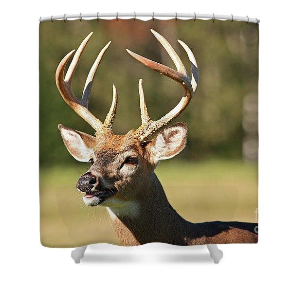 Trophy Whitetail Deer Buck Shower Curtain