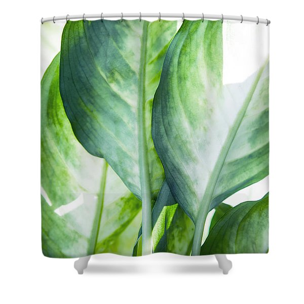 Tropic Abstract  Shower Curtain