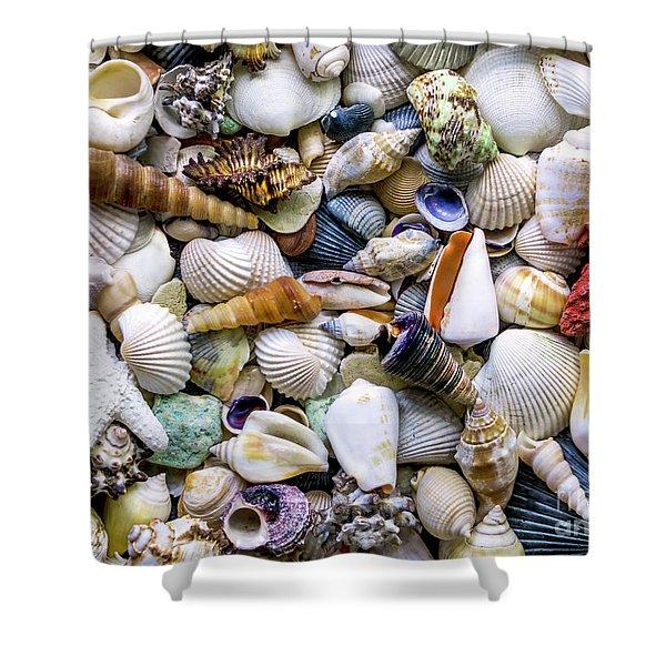 Tropical Beach Seashell Treasures 1500a Shower Curtain
