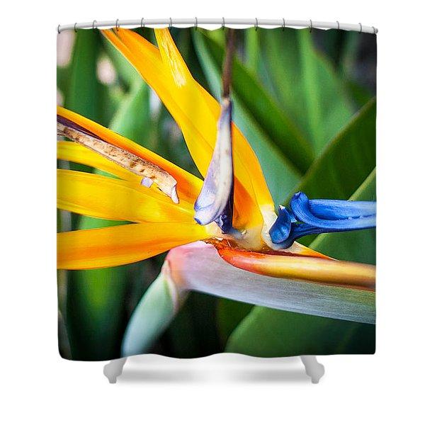 Tropical Closeup Shower Curtain