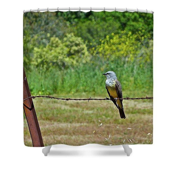 Tropical Kingbird Shower Curtain