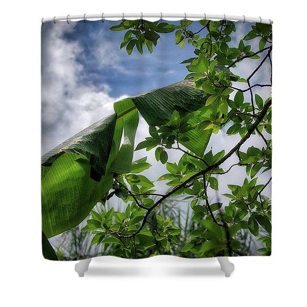 Tropical Sky Shower Curtain