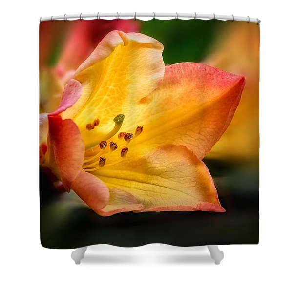 Shower Curtain featuring the photograph Trumpet Of Spring by Mary Jo Allen