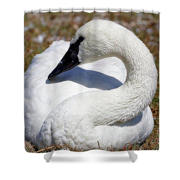 Trumpeter Swan Calming Effect Shower Curtain