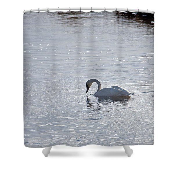 Trumpeter Swan Yellowstone Shower Curtain