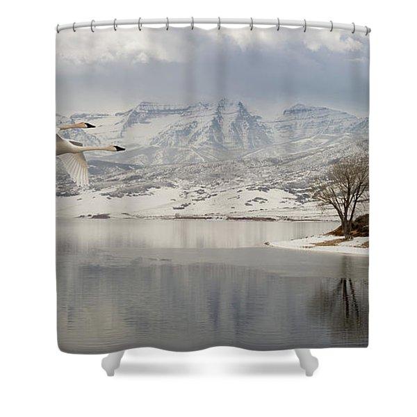Trumpeter Swans Wintering At Deer Creek Shower Curtain