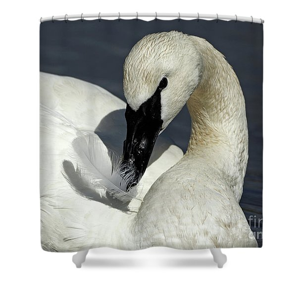 Trumpeter With Feather Shower Curtain