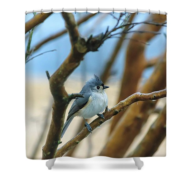 Tufted Titmouse In Tree Shower Curtain