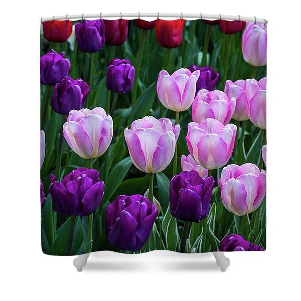 Tulip Blush Shower Curtain