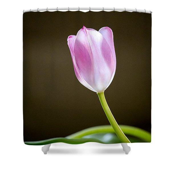 Tulip Shower Curtain