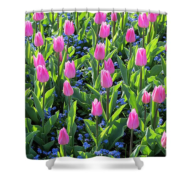 Tulip Christmas Dream Flowers Shower Curtain