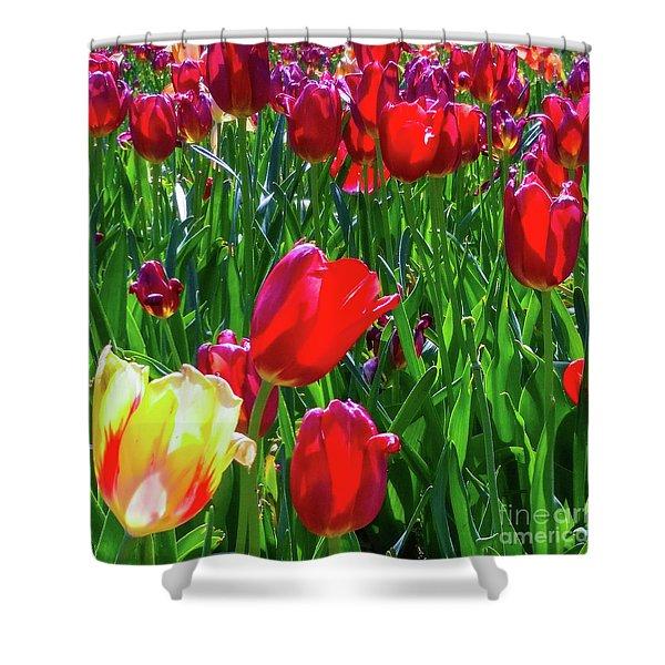 Tulip Garden In Bloom Shower Curtain