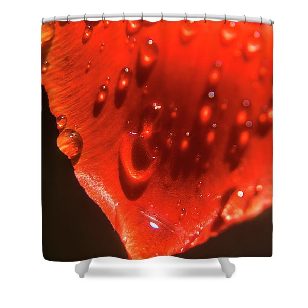 Tulip Petals After A Rain-2197 Shower Curtain