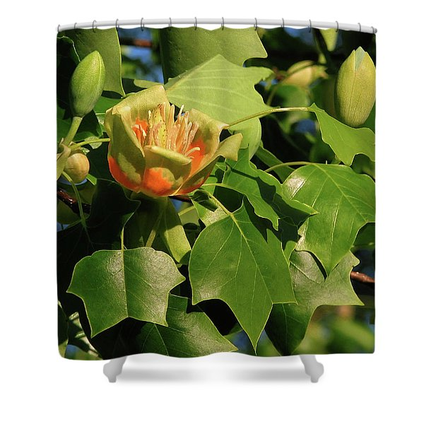 Tulip Poplar Shower Curtain