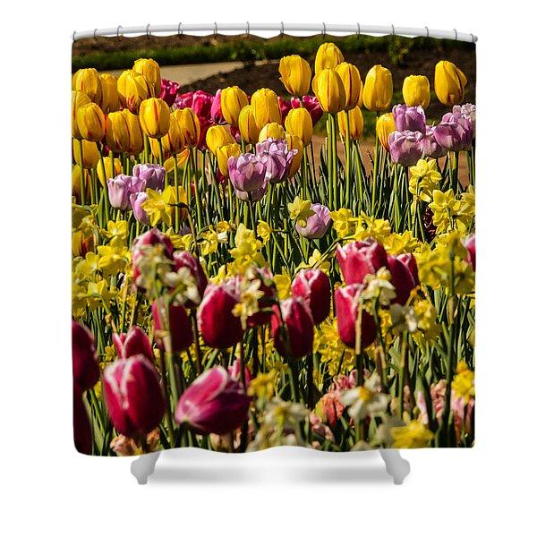 Tulip Spring Shower Curtain