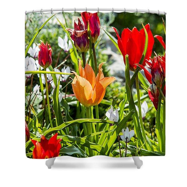 Tulip - The Orange One Shower Curtain