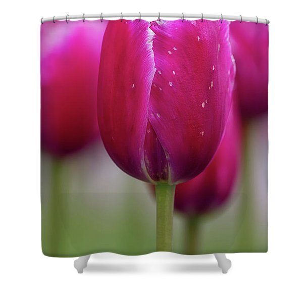 Shower Curtain featuring the photograph Tulip Time 22 by Heather Kenward