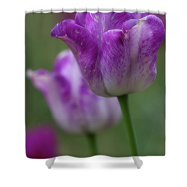 Shower Curtain featuring the photograph Tulip Time 24 by Heather Kenward