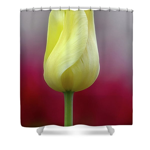 Shower Curtain featuring the photograph Tulip Time 25 by Heather Kenward