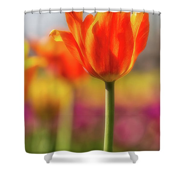 Tulip Time 28 Shower Curtain